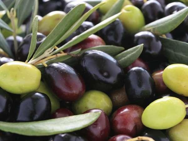 польза и вред для организма маслины