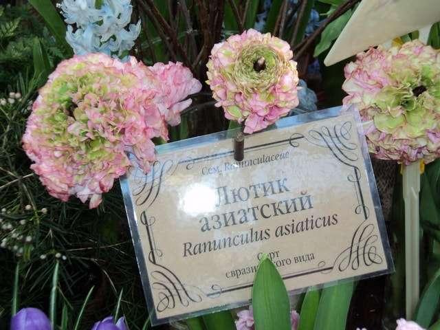 аптекарский огород выставка