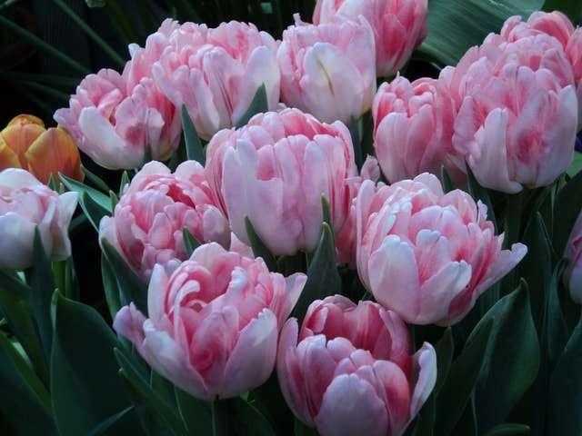 нежные бело-розовые грейга
