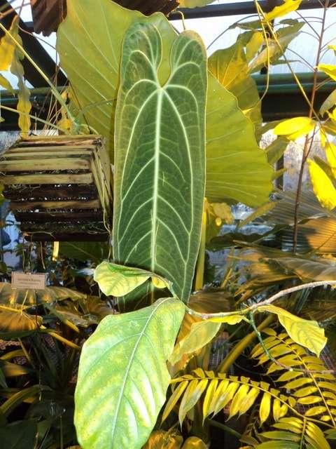 викторная оранжерея аптекарский огород