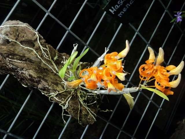 оранжерея аптекарский огород