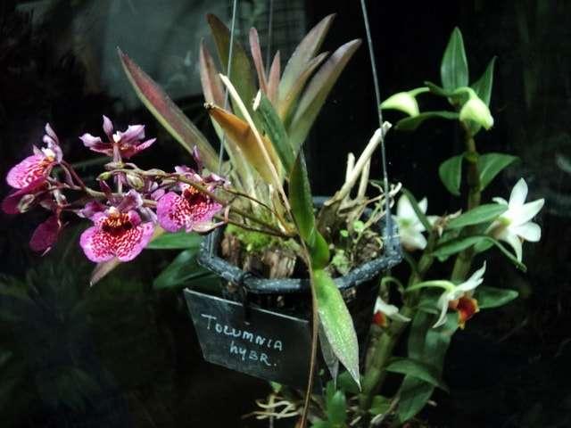 оранжереи аптекарский огород