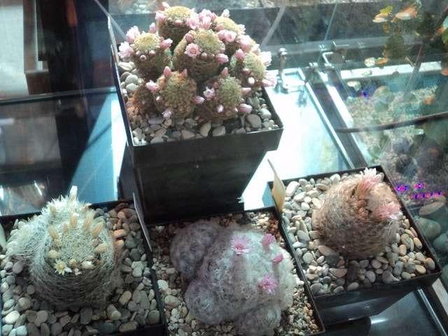 растения в ботаническом саду фото