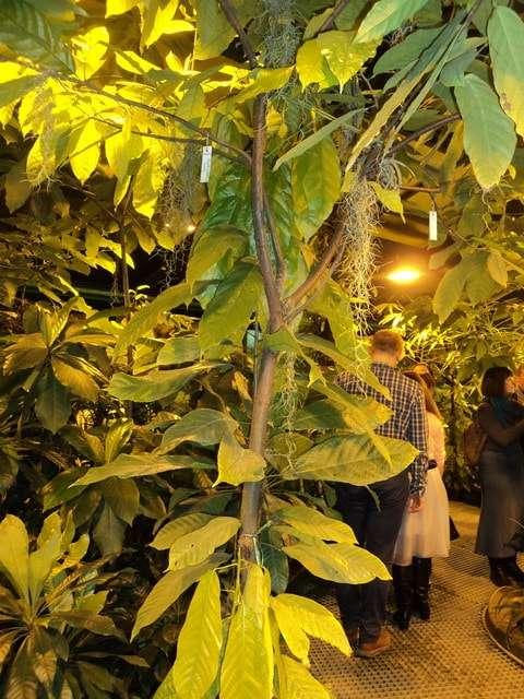 викторная оранжерея аптекарского огорода