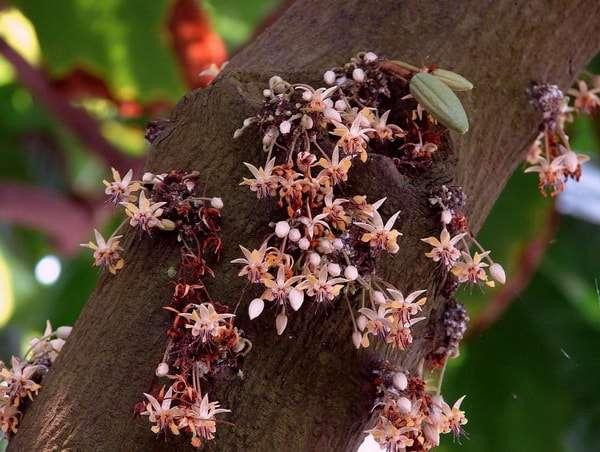 цветки на стволе дерева