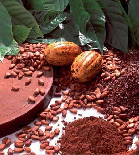 польза и вред для здоровья порошок какао