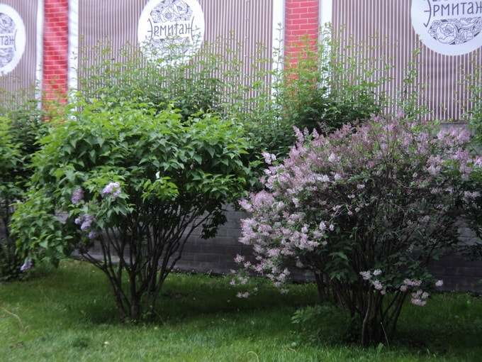 самоварфест в саду эрмитаж
