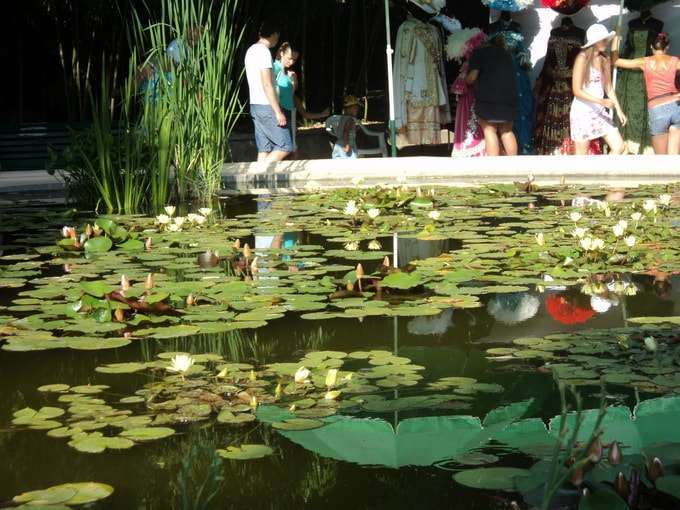 круглый бассейн с цветами