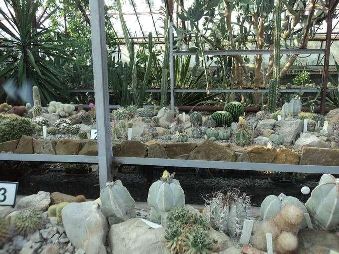 большая коллекция кактусовой оранжереи
