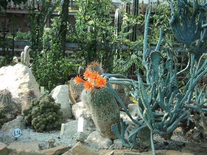 экзотические растения оранжереи