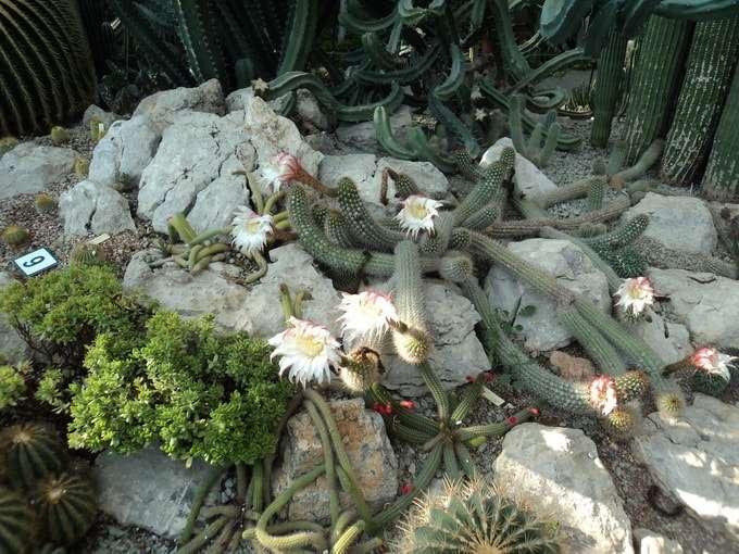 цветы среди камней фото