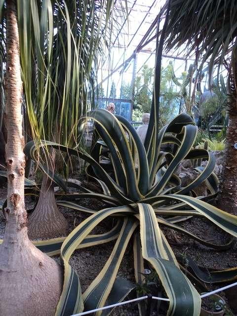 кактусовая оранжерея в никитском ботаническом саду фото