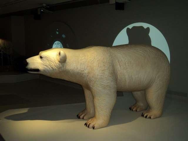русская арктика в зарядье фото