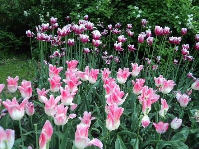 роскошные цветы