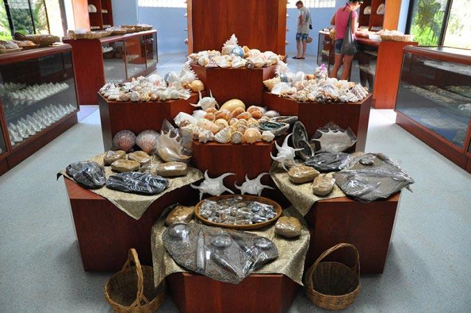 музей раковин