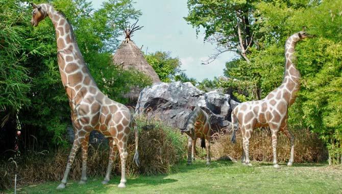 африканская саванна жирафы