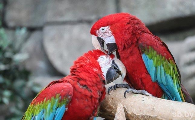 попугаи зоопарк