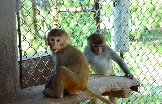 питомник обезьян