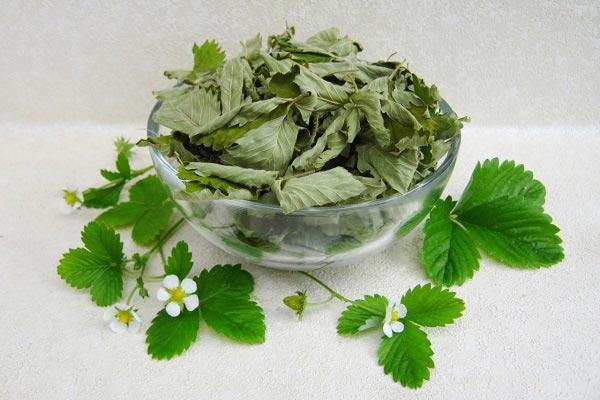 полезные свойства листьев земляники