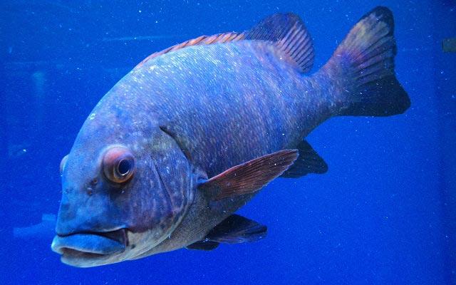 океанариум риф анапа цены
