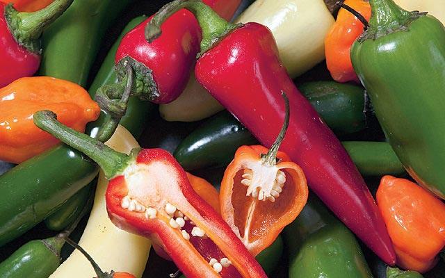 острый перец польза и вред для здоровья