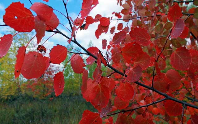 дерево осенью