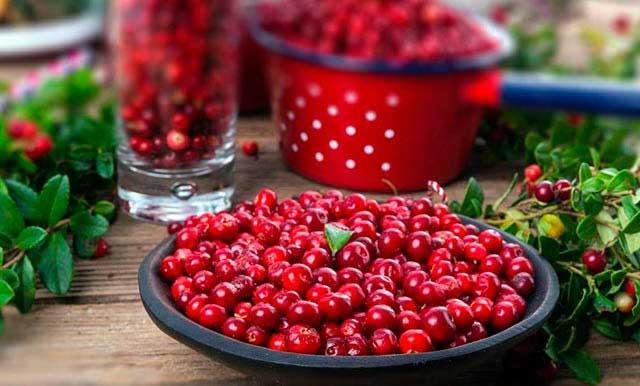 ягоды брусники лечебные свойства